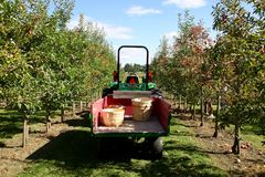 Трактор жать яблока стоковое изображение
