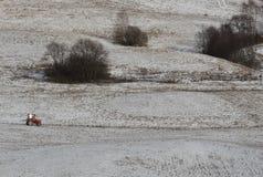 трактор красного цвета поля cornwall Англии стоковое изображение rf