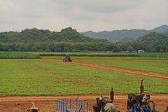 Трактор на ферме Стоковое Фото