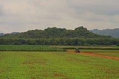 Трактор на ферме Стоковое Изображение