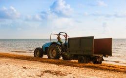 Трактор очищая пляж от морской водоросли Побережье Атлантики Доминиканской Республики стоковое фото rf