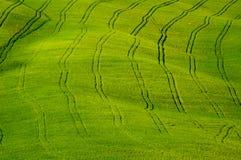 трактор следов полей Стоковые Фото