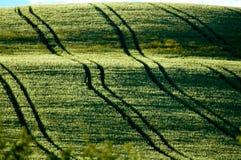 трактор следов полей Стоковое фото RF