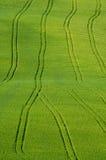 трактор следов полей Стоковое Фото
