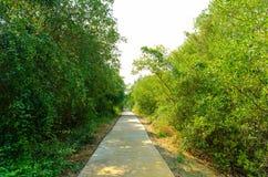 Тракт пущи мангровы. Стоковое Изображение RF