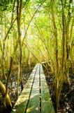 Тракт пущи мангровы. Стоковые Фото