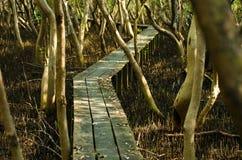 Тракт пущи мангровы. Стоковые Изображения RF