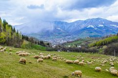 Трансильвания волшебна Красивый ландшафт от деревни Prundu Bargaului, около города Bistrita, Румыния стоковая фотография