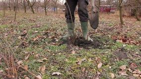 Трансплантируя новый отпрыск с корнями, фруктовое дерев дерево dibble сток-видео