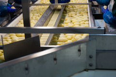 Транспортер обрабатывать картошки Стоковые Фотографии RF