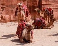 Транспорт пустыни стоковые изображения rf