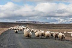 Трасса гористой местности Kjölur Стоковые Фотографии RF