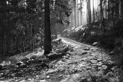 трасса гор стоковое изображение rf