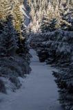 Трасса зимы туристская Стоковое фото RF