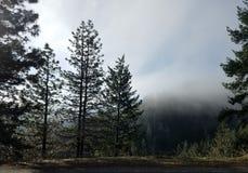Трасса США деревьев управляя водителем грузовика образа жизни стоковое фото