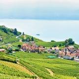 Трасса террасы виноградника Lavaux пешая в швейцарце Стоковые Изображения