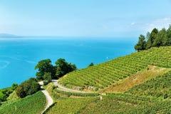 Трасса террас виноградника Lavaux в Швейцарии Стоковое Изображение RF