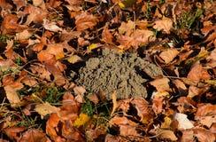 насыпь земли от роет моли Трассировка моли на t стоковое изображение rf