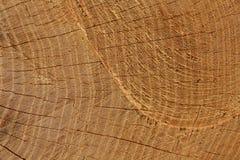 Трассировка цепной пилы на дереве стоковые изображения rf
