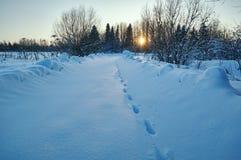 Трассировки волка на дороге зимы Сельская местность, Россия Стоковые Фото