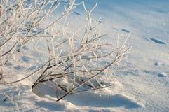 Трассировки животных в свежем глубоком снеге Стоковое Фото
