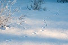 Трассировки животных в свежем глубоком снеге Стоковые Фотографии RF