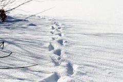 Трассировки животных в холодном белом снеге Стоковое фото RF