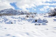 Трассировки животных и теней на снеге уклончивые трассировки дикого животного на снеге Трассировки на снеге выведены не персоной Стоковые Фотографии RF