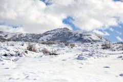 Трассировки животных и теней на снеге уклончивые трассировки дикого животного на снеге Трассировки на снеге выведены не персоной Стоковые Изображения
