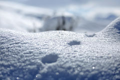 Трассировки животных и теней на снеге уклончивые трассировки дикого животного на снеге Трассировки на снеге выведены не персоной  Стоковое Изображение