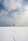 Трассировки зайца на свежем снеге извиваются Стоковое Фото