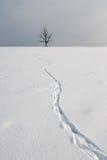 Трассировки зайца на свежем снеге извиваются Стоковое фото RF