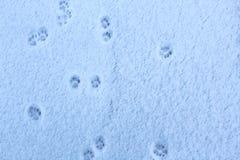 Трассировки ног кота на свежо упаденном снеге стоковое изображение rf