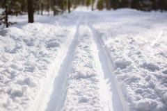 Трассировки следа лыжи на чистом белом снеге в лесе стоковое фото rf