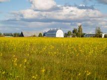 Традиционная архитектура американского амбара через поле желтого цвета Стоковое Изображение RF