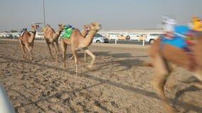 Традиционная гонка верблюда в Дохе