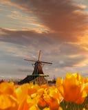 Традиционная голландская ветрянка с тюльпанами в Zaanse Schans, области Амстердама, Голландии Стоковые Изображения RF