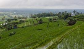 Традиционная терраса рисовых полей Стоковые Фотографии RF