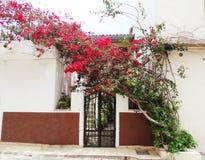 Традиционная улица среди bougainvillaea в городе Греции rethymno Стоковые Фото