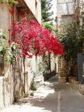 Традиционная улица среди bougainvillaea в городе Греции rethymno Стоковое Фото