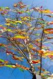 Традиционное украшение чеха пасхи - украшенное дерево березы Береза повислая с красочными лентами и покрашенными яичками - сельск Стоковая Фотография RF