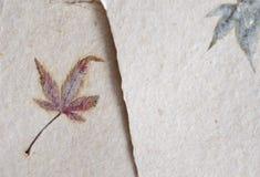 Традиционное washi японской бумаги с кленовым листом Стоковое Изображение