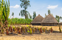 Традиционные дома в деревне в Эфиопии стоковая фотография
