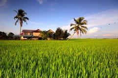 Традиционный дом в рисовых полях Стоковая Фотография