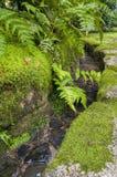 Традиционный японский водяной канал сада с ruprechtii Asplenium Стоковое Изображение RF