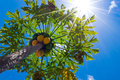 Требуемый солнечный свет стоковая фотография rf
