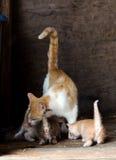 Тревоженые кот и котята матери Стоковые Изображения