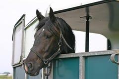 трейлер лошади стоковое изображение