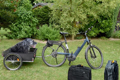 Трейлер велосипеда собаки стоковое фото