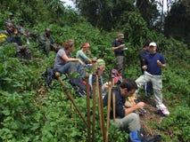 Трек гориллы Стоковая Фотография